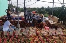 Adopta sector agrícola de Vietnam medidas preventivas ante expansión del nCoV