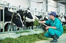Vietnam apunta a ingresar mil millones de dólares por exportación de productos lácteos