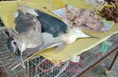 Fortalece Vietnam lucha contra el contrabando de animales salvajes ante brote de coronavirus