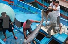Vietnam prevé crecimiento de sus exportaciones de atún para 2020