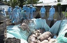 Cooperan Vietnam y Estados Unidos en producción de vacunas contra la peste porcina africana