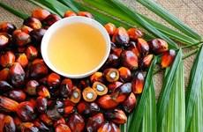Recomiendan a productores malasios de aceite de palma aplicar tecnologías para mejorar productividad