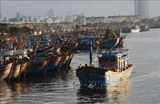 Revisan la pesca con responsabilidad en localidades centrales de Vietnam