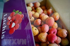 Vietnam se prepara para exportar lichi a Japón