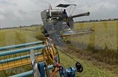 Aspira Tailandia a recuperar el trono mundial de arroz