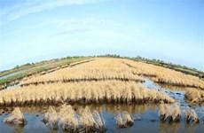 Delta del Mekong hace frente a salinización