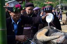 Rito dedicado al búfalo, tradición de la etnia Lu en Vietnam