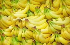 Productores filipinos de plátano enfrentan dificultades debido a COVID-19