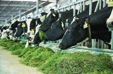 Fábrica lechera de Vietnam accede a mercado de China