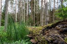 UE financia proyecto de gestión forestal sostenible en provincia vietnamita