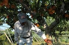 Singapur levanta prohibición a importación de alimentos de prefectura japonesa de Fukushima