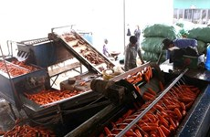 Vietnam y Estados Unidos proyectan impulsar cooperación agrícola