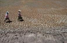 Provee Gobierno de Tailandia ayuda millonaria a agricultores afectados por la sequía