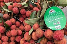 Lichi de Luc Ngan entre los productos típicos de provincia vietnamita de Bac Giang