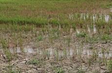 Provincia vietnamita invierte en proyecto de agua potable para afectados por sequía