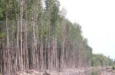 Bosques en provincia vietnamita de Ca Mau enfrentan alto riesgo de incendio