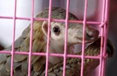 WFF en Vietnam aboga por prohibir el comercio y consumo de vida silvestre