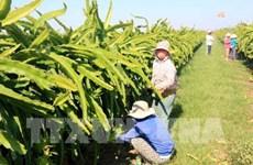 Tratado de Libre Comercio con la UE, buena oportunidad para agricultura vietnamita