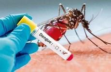 Enfrenta Indonesia brote de dengue