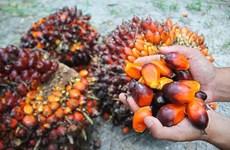 Malasia desea resolver disputa sobre aceite de palma con India