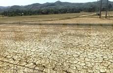 Sequía afecta la producción agrícola en Camboya