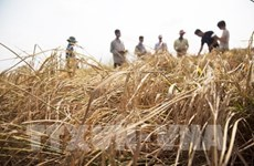 Fondo Verde para el Clima respalda a Vietnam a mejorar la resiliencia climática