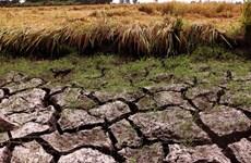 PNUD respalda al delta del Mekong de Vietnam en lucha contra la sequía