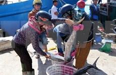 Provincia costera vietnamita por intensificar lucha contra pesca ilegal