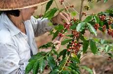 Café vietnamita despierta al mundo, según CNN