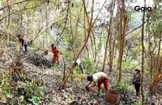 Vietnam restaura siete hectáreas de hábitat forestal para especies en peligro de extinción