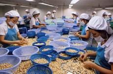 Aumentan exportaciones de anacardo de Vietnam a Estados Unidos