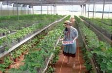 Ciudad Ho Chi Minh cuenta con más de mil 700 empresas agrícolas