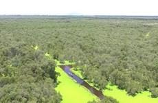 Día Mundial del Medio Ambiente 2020 se centrará en la biodiversidad