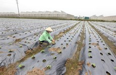 Ciencia y tecnología: llaves para éxito de construcción de nueva ruralidad en Vietnam