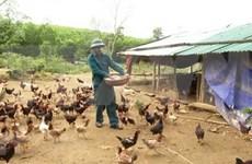 Provincia vietnamita declara fin de epidemia de gripe aviar A/H5N6