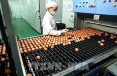 Prohíbe Tailandia la exportación de huevos de gallina durante siete días