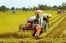 Productividad de arroz en Delta del río Mekong será de tres millones de toneladas