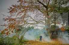 Embellecen las flores de algodoneros rojos áreas rurales vietnamitas en marzo