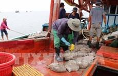 Provincia vietnamita se incorpora al combate contra pesca ilegal