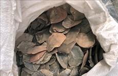 Incauta Malasia más de seis toneladas de escamas de pangolín