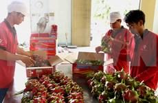 Dedican semana a pitahaya de pulpa roja vietnamita en Australia