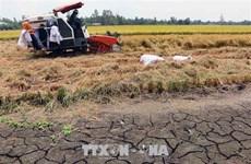 Reciben provincias del Delta Mekong asistencia para hacer frente a la sequía