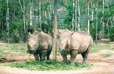 Refuerza Vietnam protección de especies en peligro de extinción