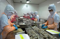 Pronostican recuperación del sector camaronero de Vietnam en segunda mitad del año