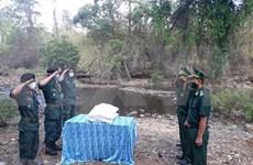 Asistencia arrocera en zonas limítrofes estrecha relaciones Vietnam-Camboya