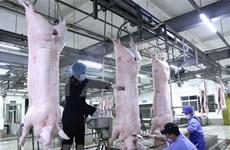 Aumenta Vietnam importación de carne de cerdo en primer trimestre de 2020