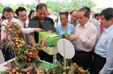 Provincia vietnamita de Hai Duong por promover la exportación de lichi
