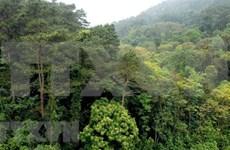 Avanza provincia vietnamita en gestión sostenible de bosques
