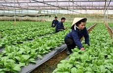 Hanoi promueve inversiones en proyectos agrícolas