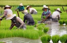 Exportaciones agrícolas y pesqueras de Filipinas crecieron en el primer trimestre de 2020